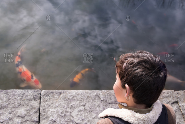 Little boy looking at koi pond