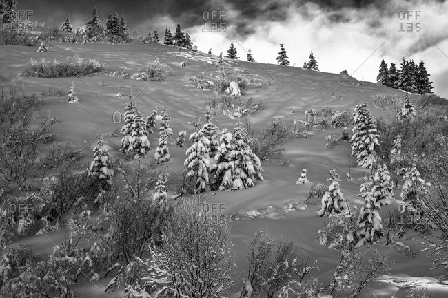 Vegetation on snowy mountainside