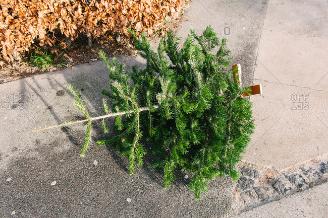 Discarded Christmas tree on a sidewalk
