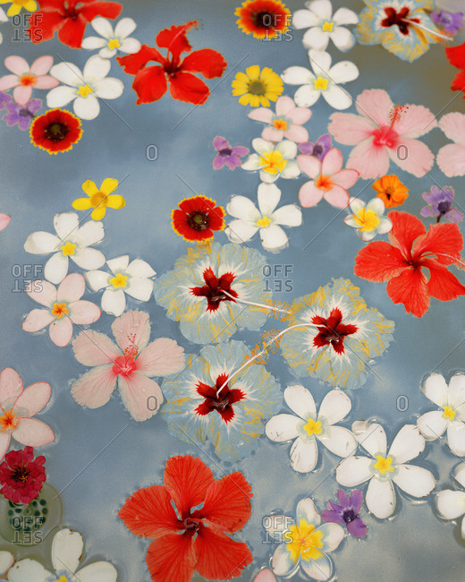 Overhead view of flowers floating in water