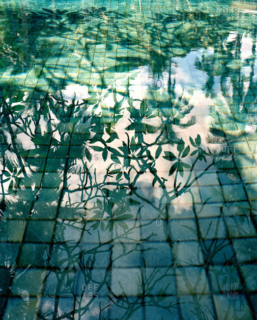 Shadows of tree branches cast on water of tiled pool