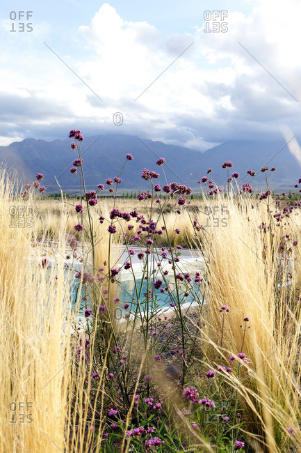 Grass and wildflowers with mountains under clouds in distance