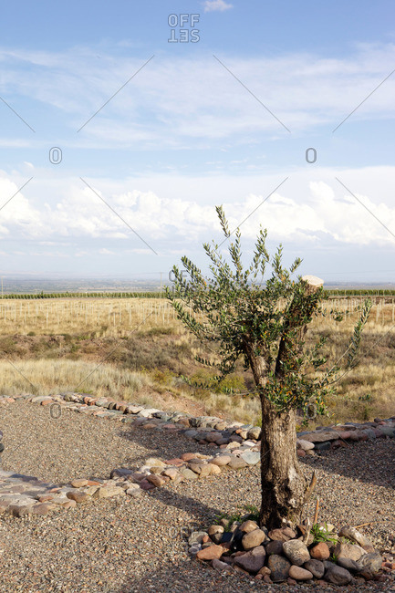 Small cropped tree with rocks piled around it