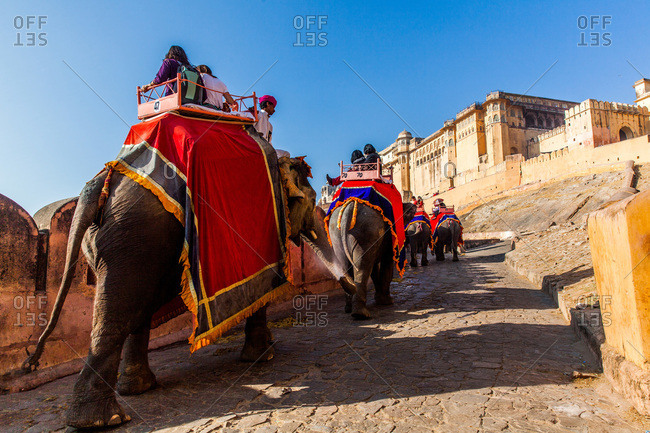 Jaipur, Rajasthan, India -January 7, 2016: Procession of elephants carrying tourists uphill at Amer Fort of Jaipur, Rajasthan