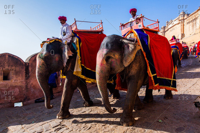 Jaipur, Rajasthan, India -January 7, 2016: Elephant drivers at Amer Fort of Jaipur, Rajasthan