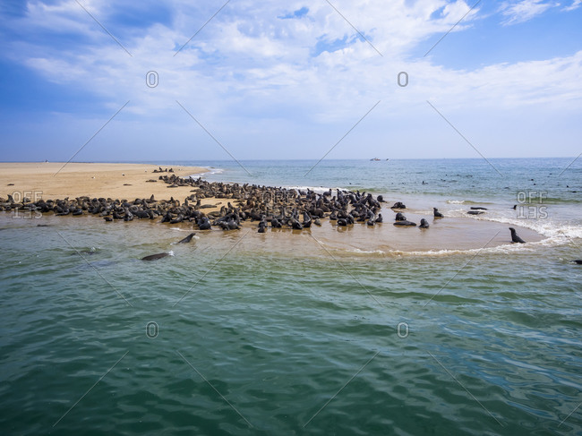 Cape fur seals lying on sandy beach