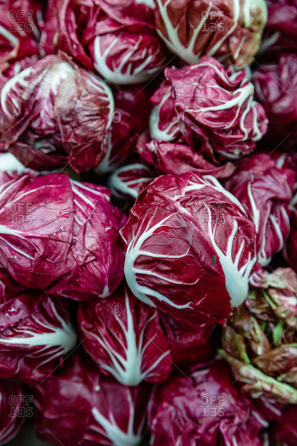 Close up of red cabbage heads