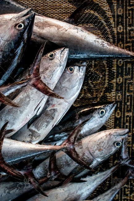 Fish in a market in Oman