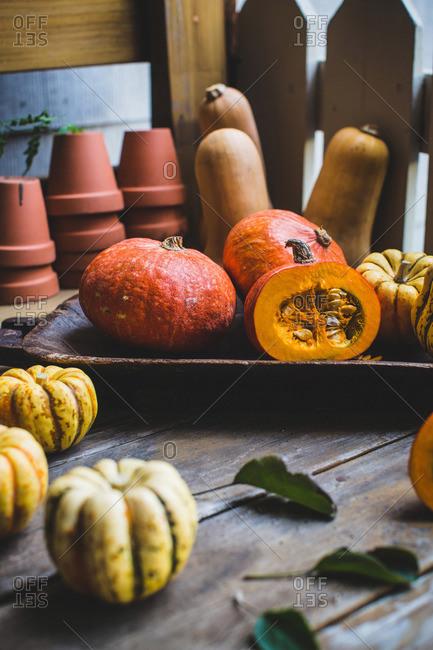 Squash varieties and terra cotta pots