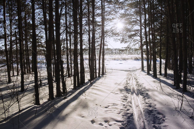 Sun shining through trees in snowy woods with cross-country ski trails