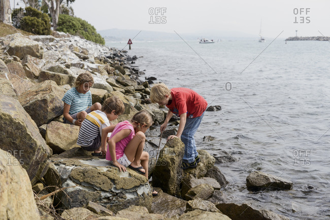 Four young children looking for marine life between rocks on coast