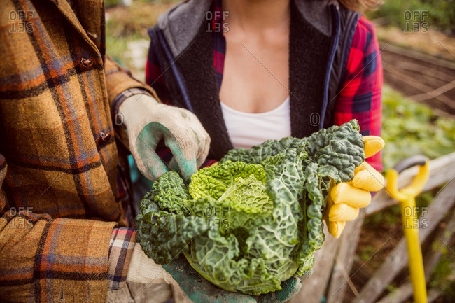 Close up of a couple showing cabbage in the countryside