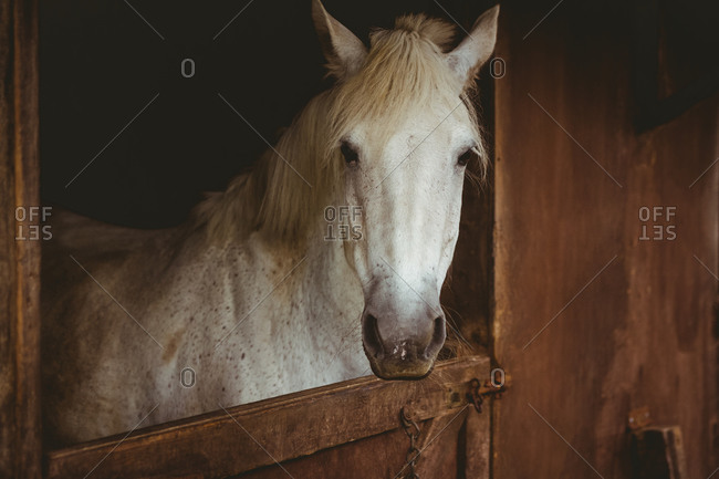 Horse looking outside a stable in the countryside