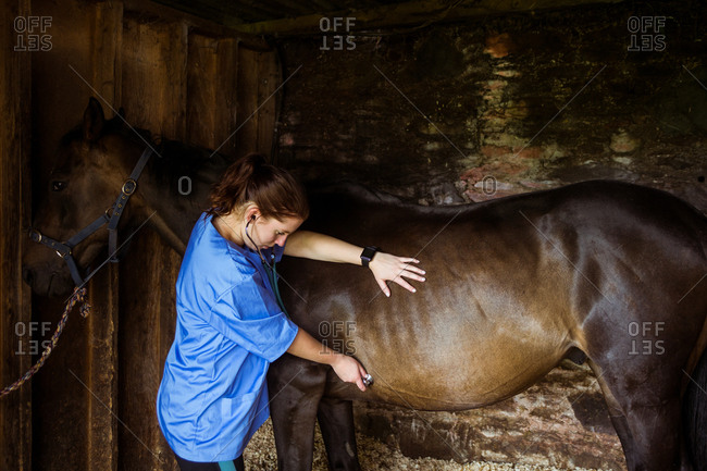 Vet examining horse in stable in the countryside