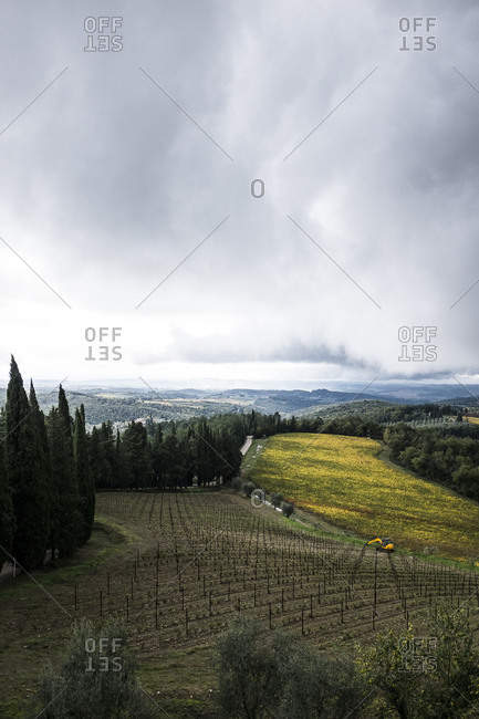 Vineyards in Italian rural setting