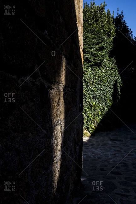 Shadowy wall and vines