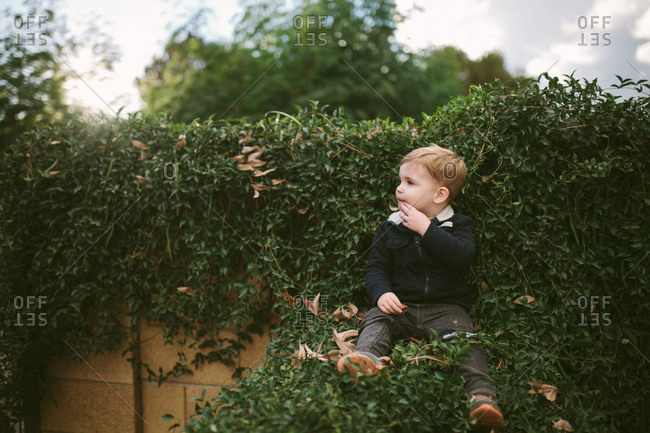 Toddler boy sitting on vine-covered wall