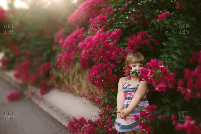 Toddler girl standing among bougainvillea flowers