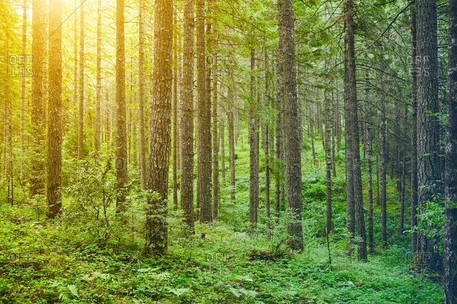 Sun dappled verdant forest