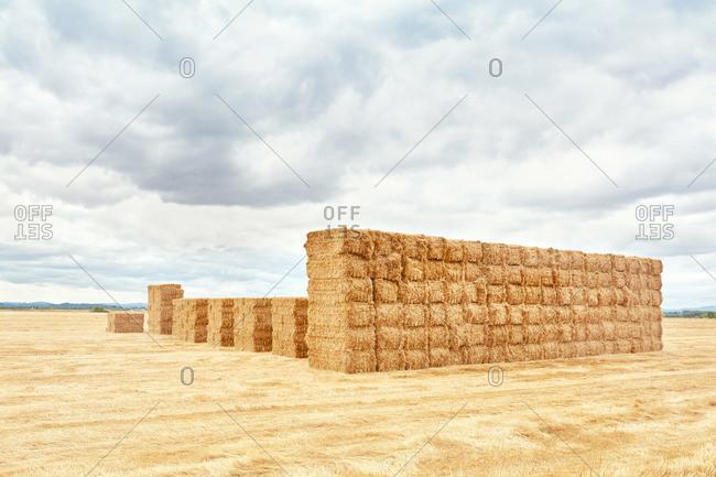 Stacks of hay bales in rural field