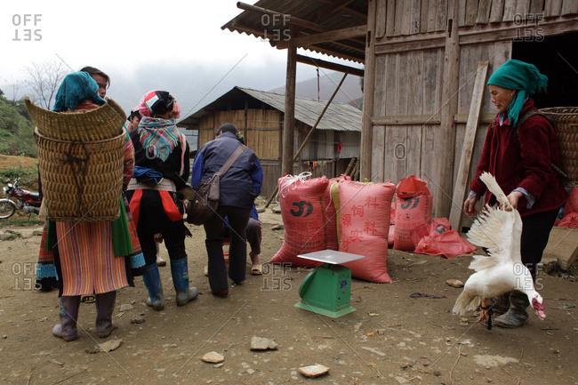 Lung Khau Nhin Market, Vietnam - March 15, 2012: Shoppers bargain for a goose at the Lung Khau Nhin Market