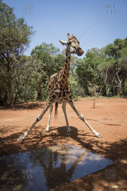 Nairobi, Langata, Hog Ranch, Kenya