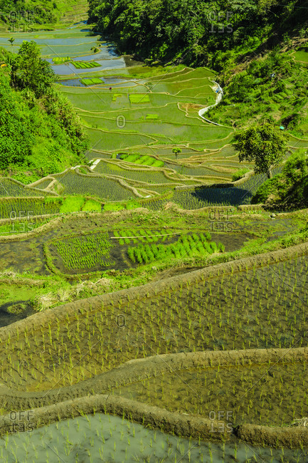 Rice terraces of Banaue, Northern Luzon, Philippines