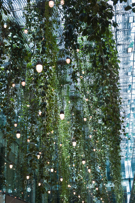 Climbing plants and lights on the ceiling, Munich, Bavaria, Germany