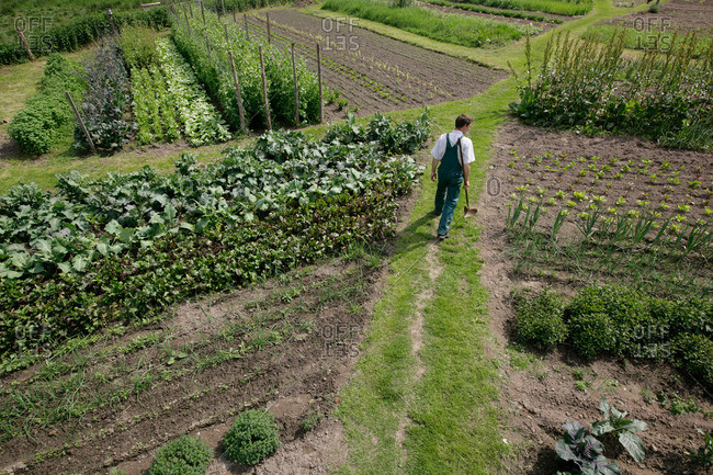 Farmer between vegetable patches, biological dynamic bio-dynamic farming, Demeter, Lower Saxony, Germany