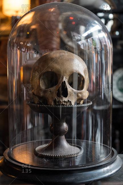 Brooklyn, New York, USA - January 16, 2016: Human skull on display, Williamsburg, Brooklyn, New York, USA