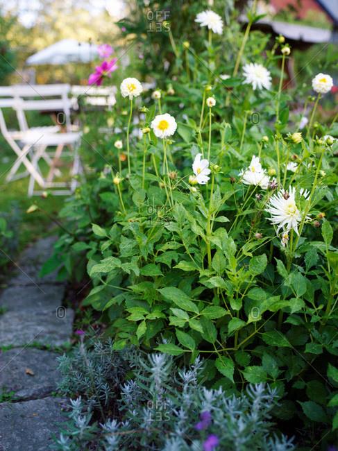 A flourishing garden, Sweden - Offset