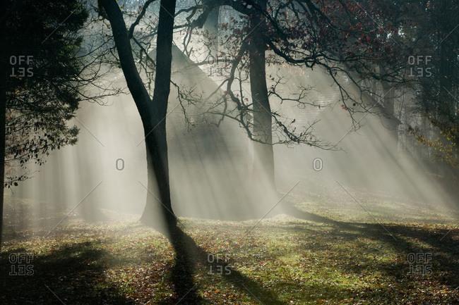 Sunbeam through trees, Wayah Bald, North Carolina, USA