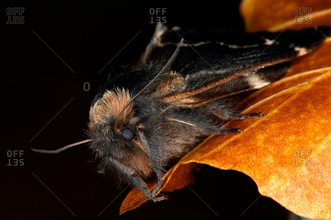Close-up of an insect on an autumn leaf, Sweden