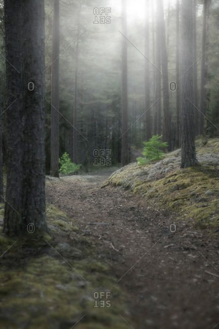 Path in a mysterious forest, Sweden
