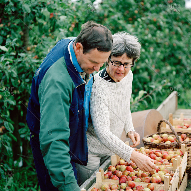 A couple looking at plums the have cultivated