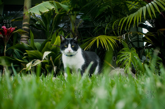 Cat standing on a grassy lawn