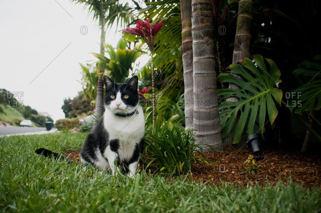 Cat sitting next to tropical landscaping
