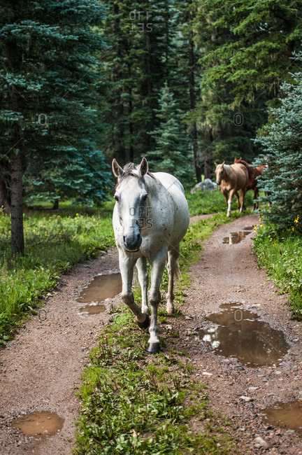 Horses walking on a rural dirt road