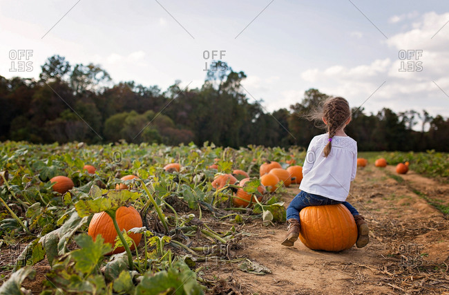 Back view of a girl sitting on a pumpkin in a pumpkin patch