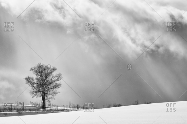 Lone tree on a ridge in Japan during winter