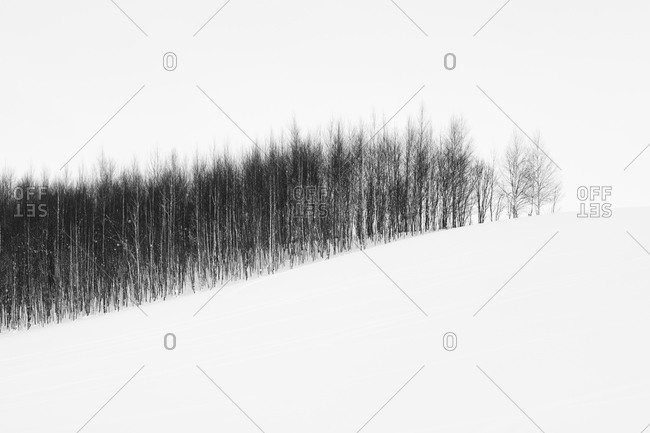 Copse of trees in rural Japanese snowstorm