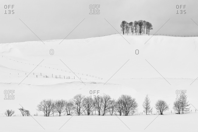 Copse of trees along snow covered ridge in rural Hokkaido Japan