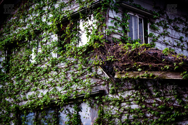 Ivy covered old house in Kanazawa, Japan