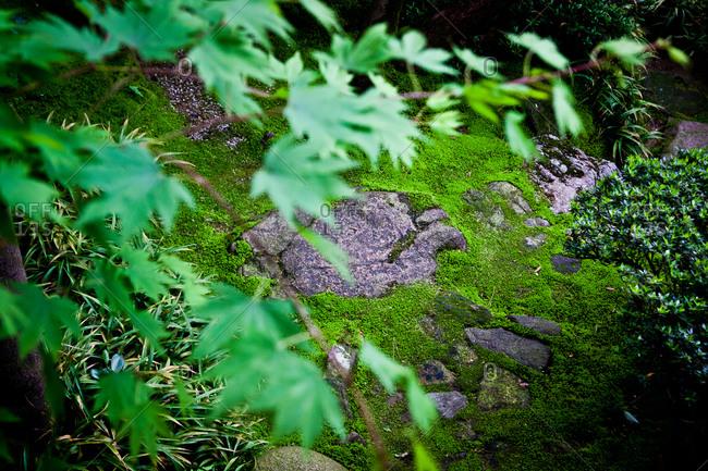 Leaves in the courtyard garden at the Nomura Samurai House in Kanazawa, Japan