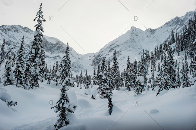 Deep snow covering pine trees on mountain slope