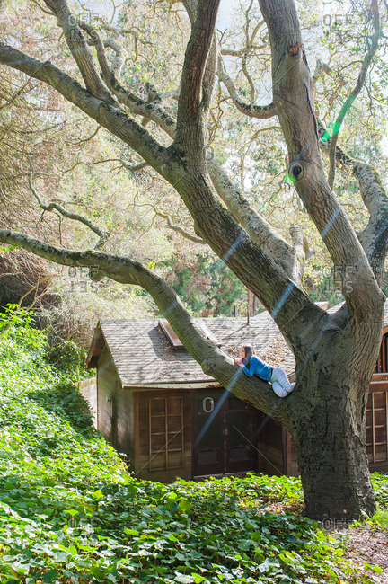 Girl reclining in the branch of a large tree