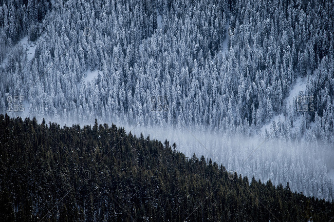 Fog rolling through a snowy forest