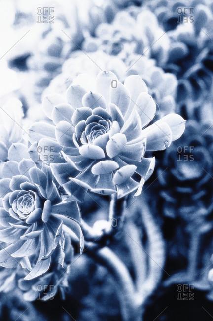 Close-up of a blue flower