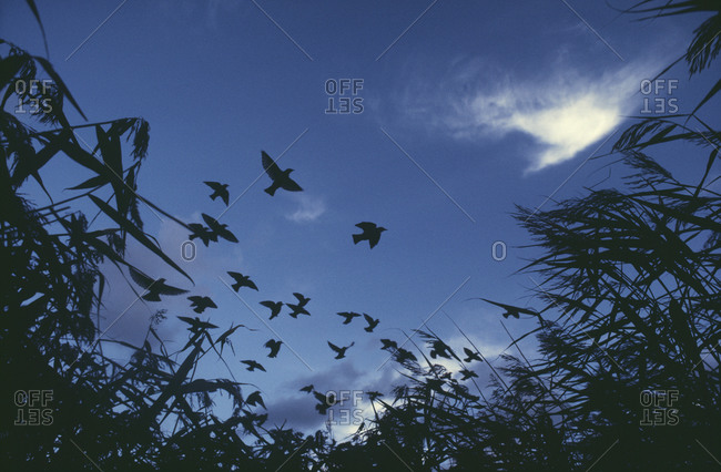 Birds flying together in sky, low angle view