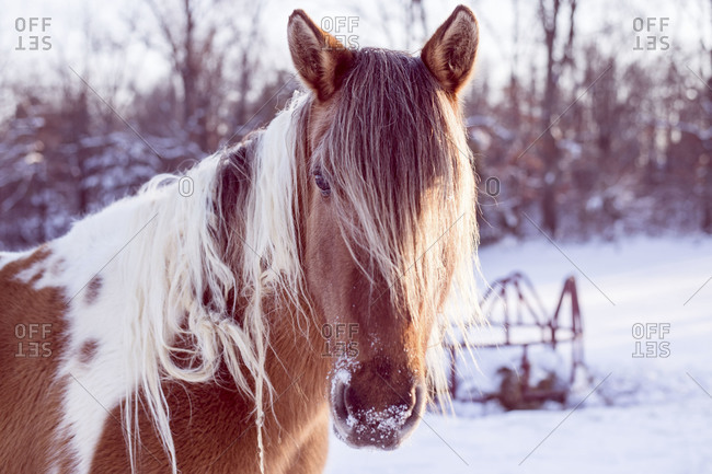 Portrait of a horse on a snowy day